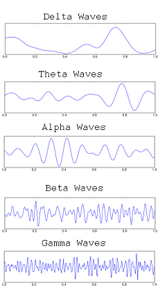 The Mind and Brain Waves